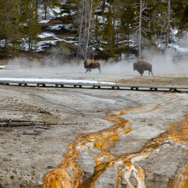 Heading for a national park? 'Biggest season in the history of the Park Service' predicted.