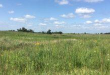 USDA Conservation Reserve Program (CRP) field planted for pollinators