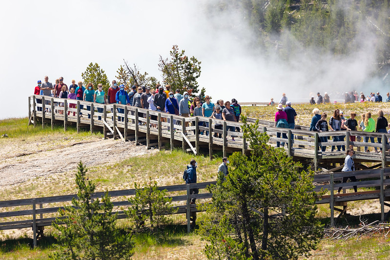 Crowds gather at Yellowstone National Park