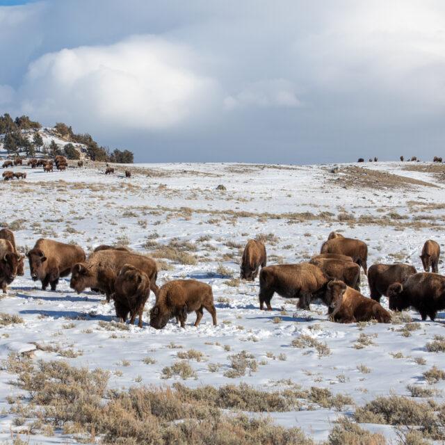 National parks struggling with maintenance would get boost under Biden budget request