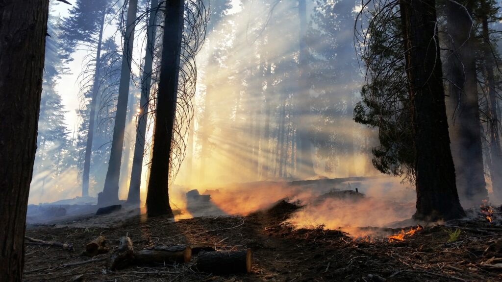 Rays of light shine through a burned forest